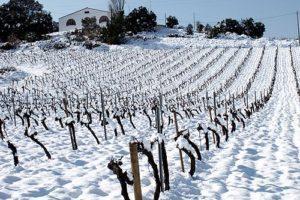 Vinya Les Torres en invierno