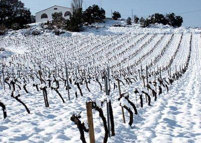 Las Torres vineyard, winter, altitude 720 m