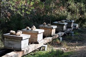 Beehives, Finca Les Valls
