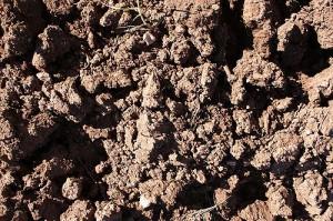 Clay Soils Las Torres