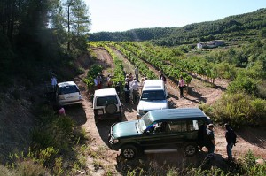 Vineyard Excursions