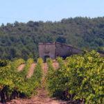 Vineyard with the masia in the background - La Torreta