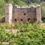Ruins of medieval defence tower, Las Torres vineyard