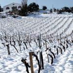 Snowy parellada vineyard, Las Torres