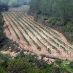 """The terrace """"Els pèlags del Foix"""", Les Valls vineyard"""