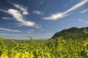 Vineyards Les Valls