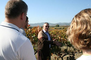 Vines and organic vineyards Pares Balta
