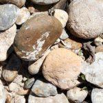calcareous-soils-ElsPujols