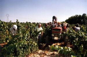 harvesting-hisendamiret