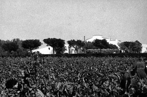 Parés Baltà estate, 1949