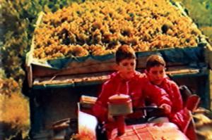Joan-Josep-harvesting-tractor