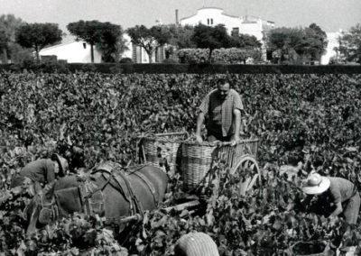 Parés Baltà History harvesting origins paresbalta