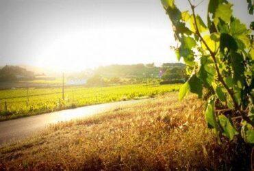 The Mediterranean Wine Road in Penedès