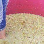 amphora-xarello-vinification-natural-ferments