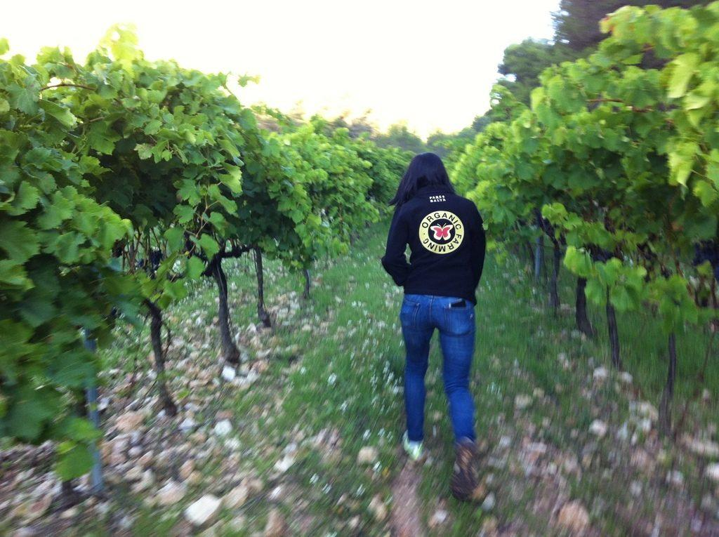 verema-2015-harvest-031