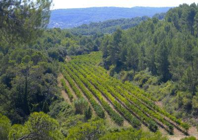 Biodinamic-Vineyards-Penedes-LesValls