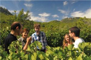 Experiencias enoturísticas en un entorno natural pb winetourism penedes tour 01