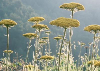 Flores les Valles