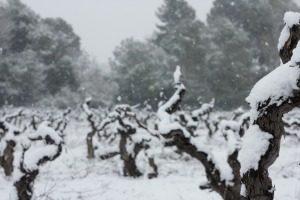 Vinyes nevades Penedès Parés Baltà