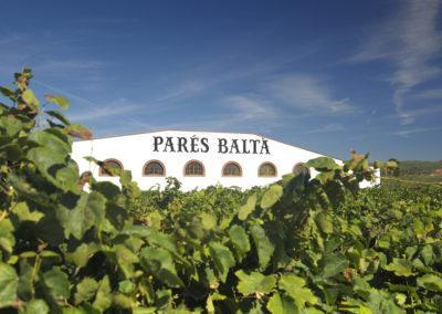 pares-balta-vineyard