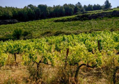 PB - OF - Vineyards - La Torreta_28 - M
