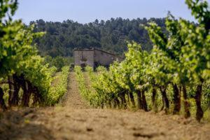 La Torreta Vineyard