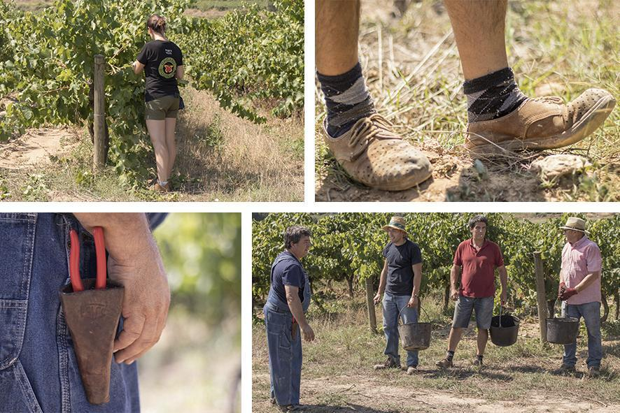 The culmination of a year of hard work – It´s harvest time! collage post blog verema 2018