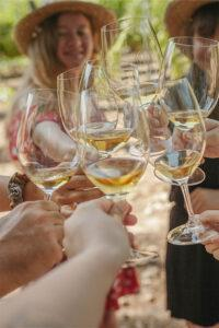 Botiga online de vins i caves terroir tour pares balta