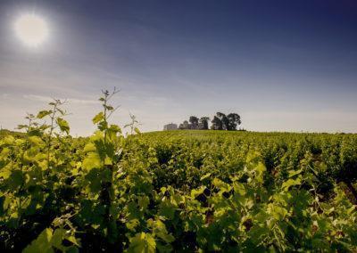 Organic and biodynamic vineyard at Parés Baltà