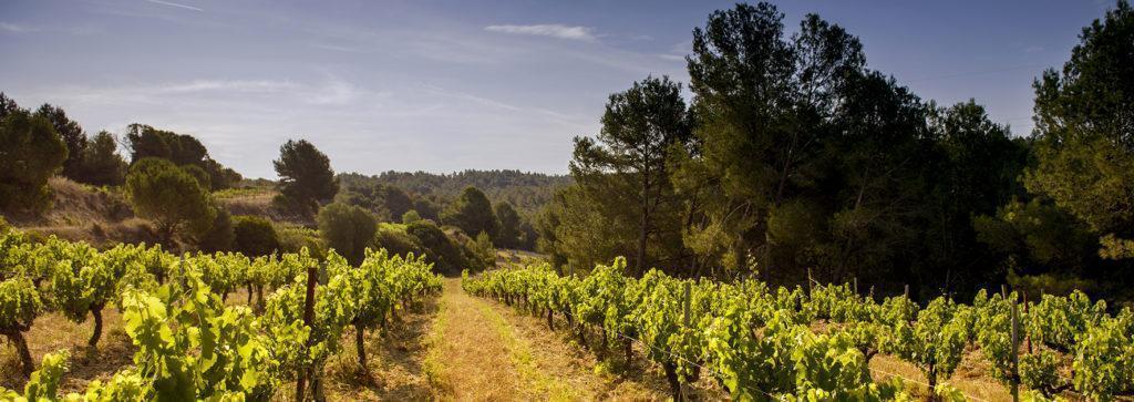 Sol sobre les vinyes biodinamiques