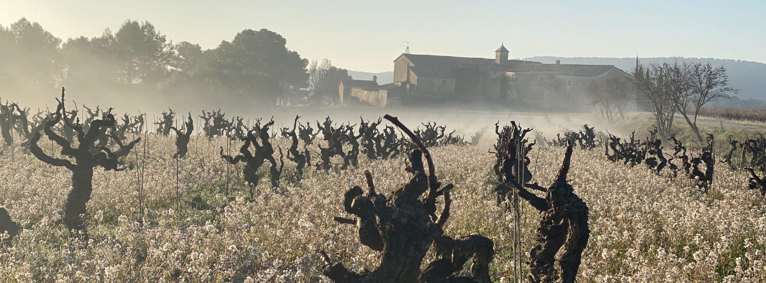 Can Miret, finca de xarel·lo de Parés Baltà, després de la poda d'hivern