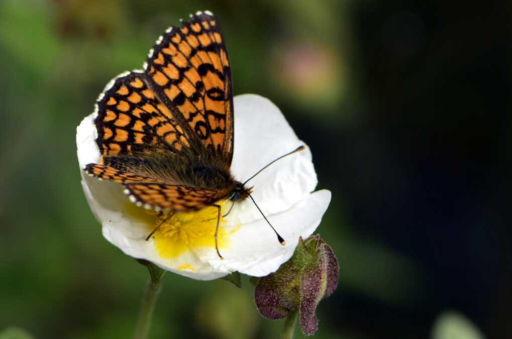 Biodinàmica a Parés Baltà