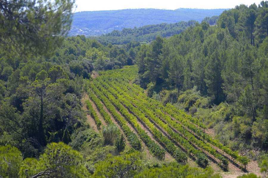 Viñedos ecológicos y biodinámicos de Parés Baltà