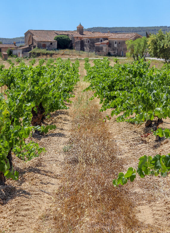 Our vineyards cal miret 1