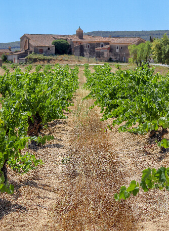 Our vineyards cal miret 2