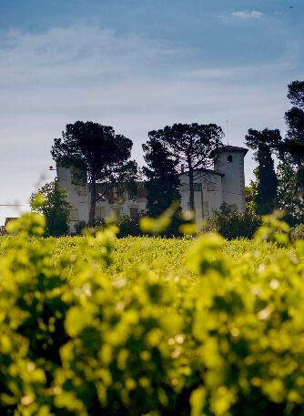 Our vineyards els pujols