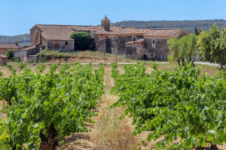 Our vineyards finca cal miret pares balta