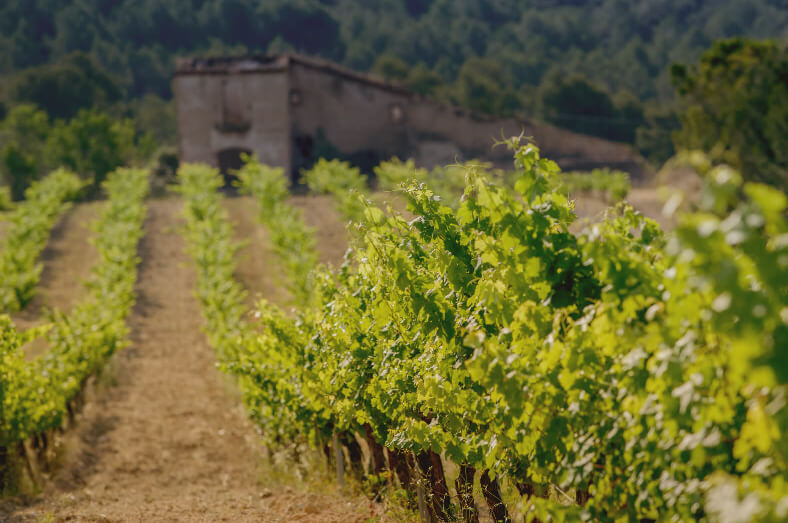 Our vineyards finca la torreta pares balta