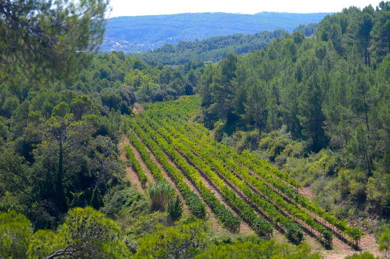 Our vineyards finca les valls pares balta