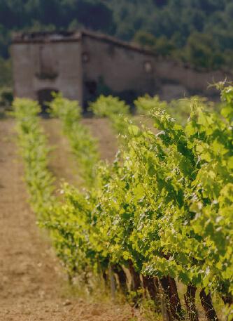 Our vineyards la torreta