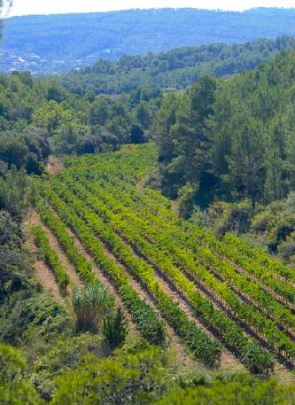 Our vineyards les valls les torres