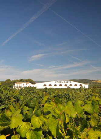 Our vineyards pares balta 2