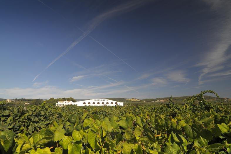 Our vineyards paresbalta jordielias 4