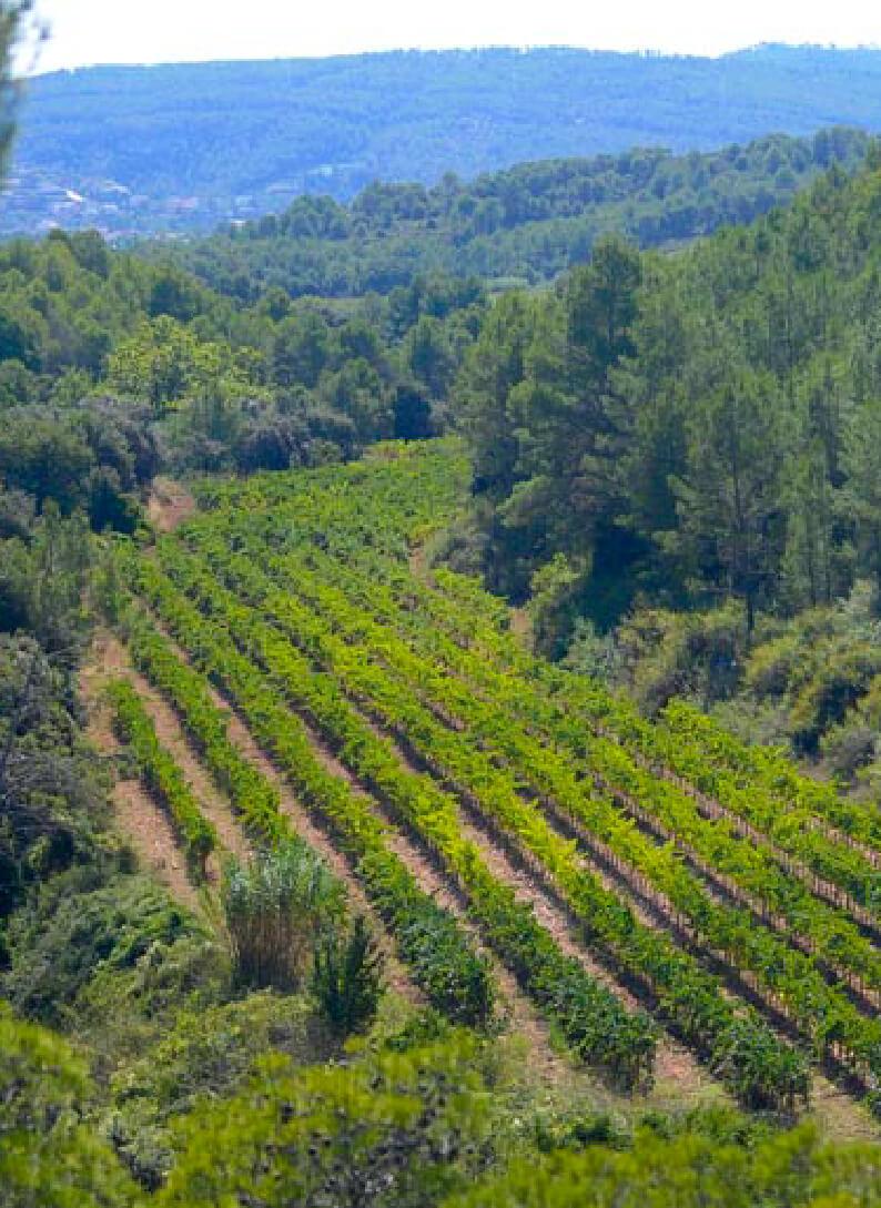 Nuestros viñedos les valls les torres