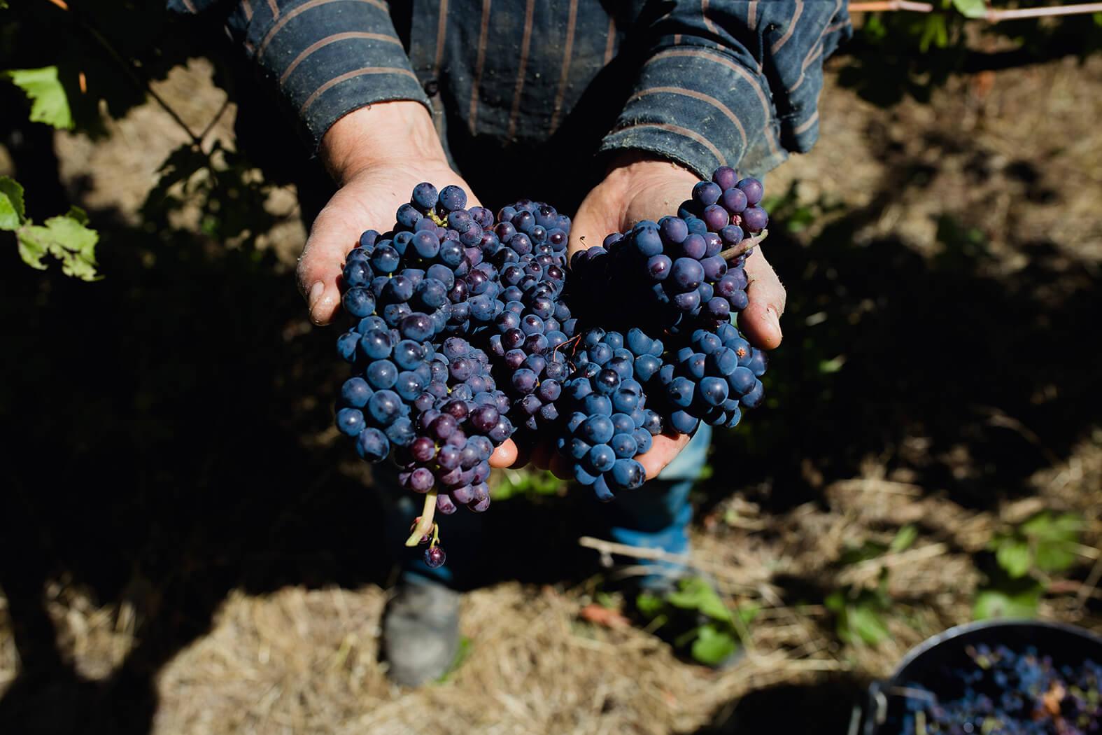 Vinyes ecològiques i biodinàmiques de Parés Baltà